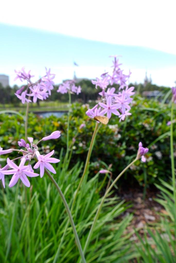 Flowers Kiley Gardens