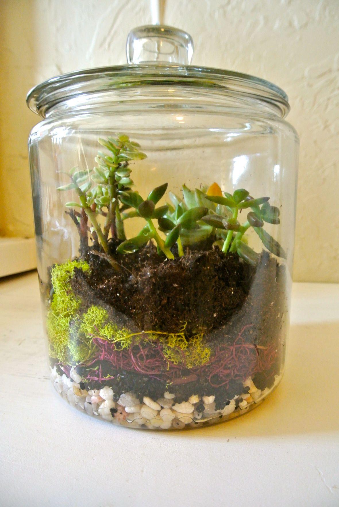 DIY Terrarium - Step three