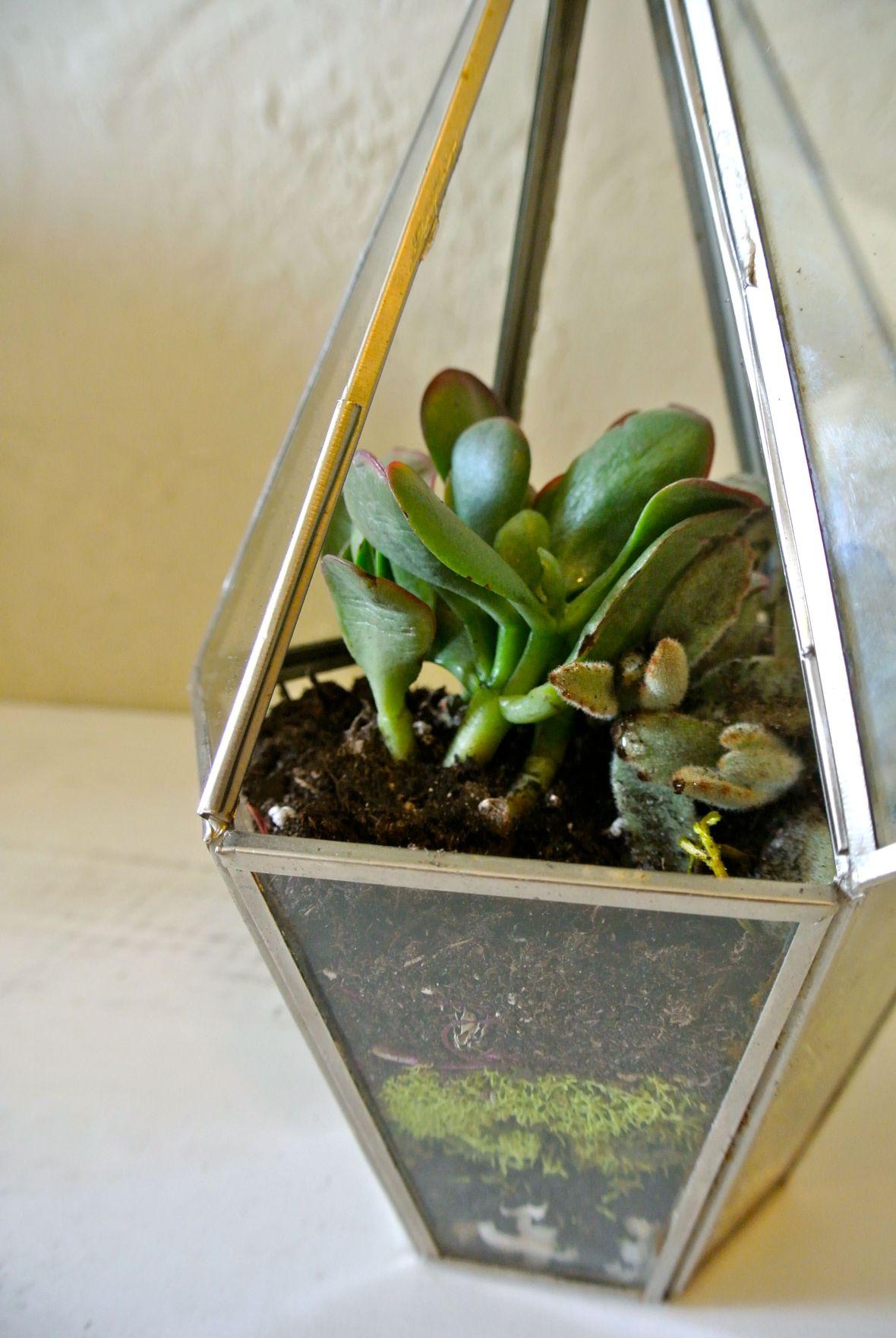 DIY Terrarium - Becca's Succulent