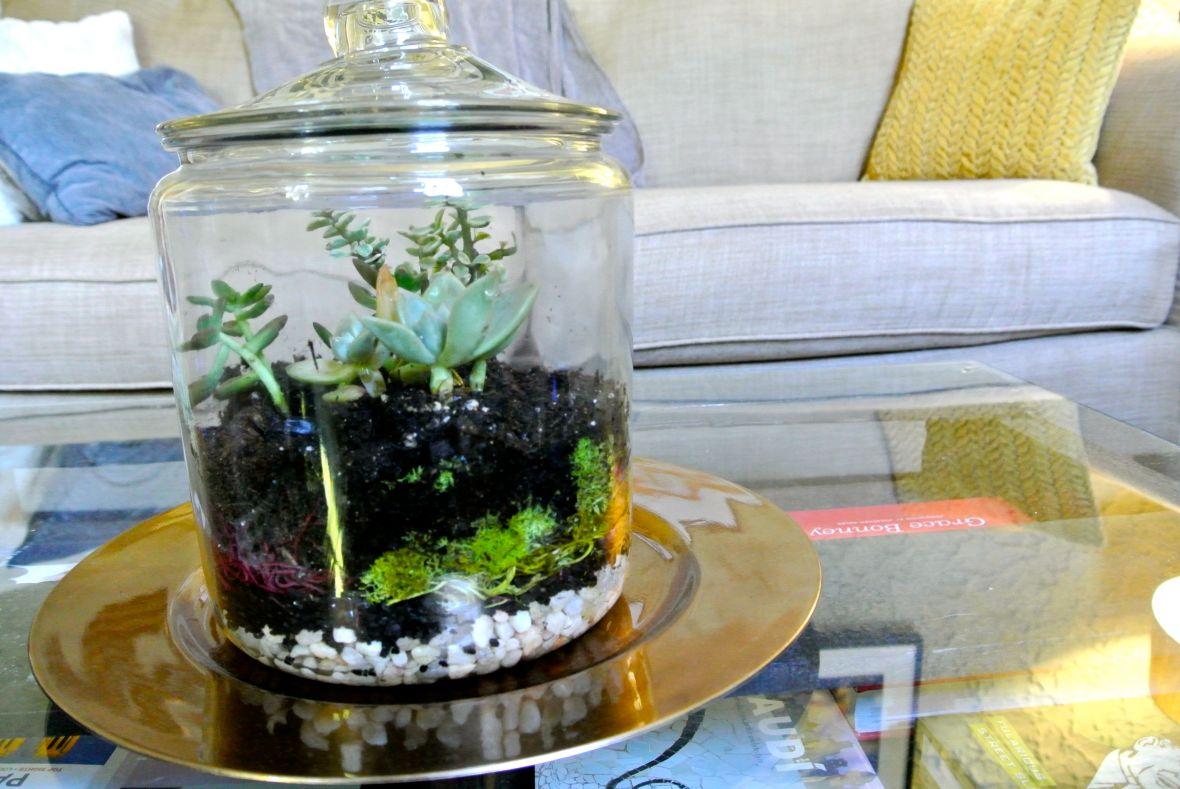 DIY Terrarium - finished